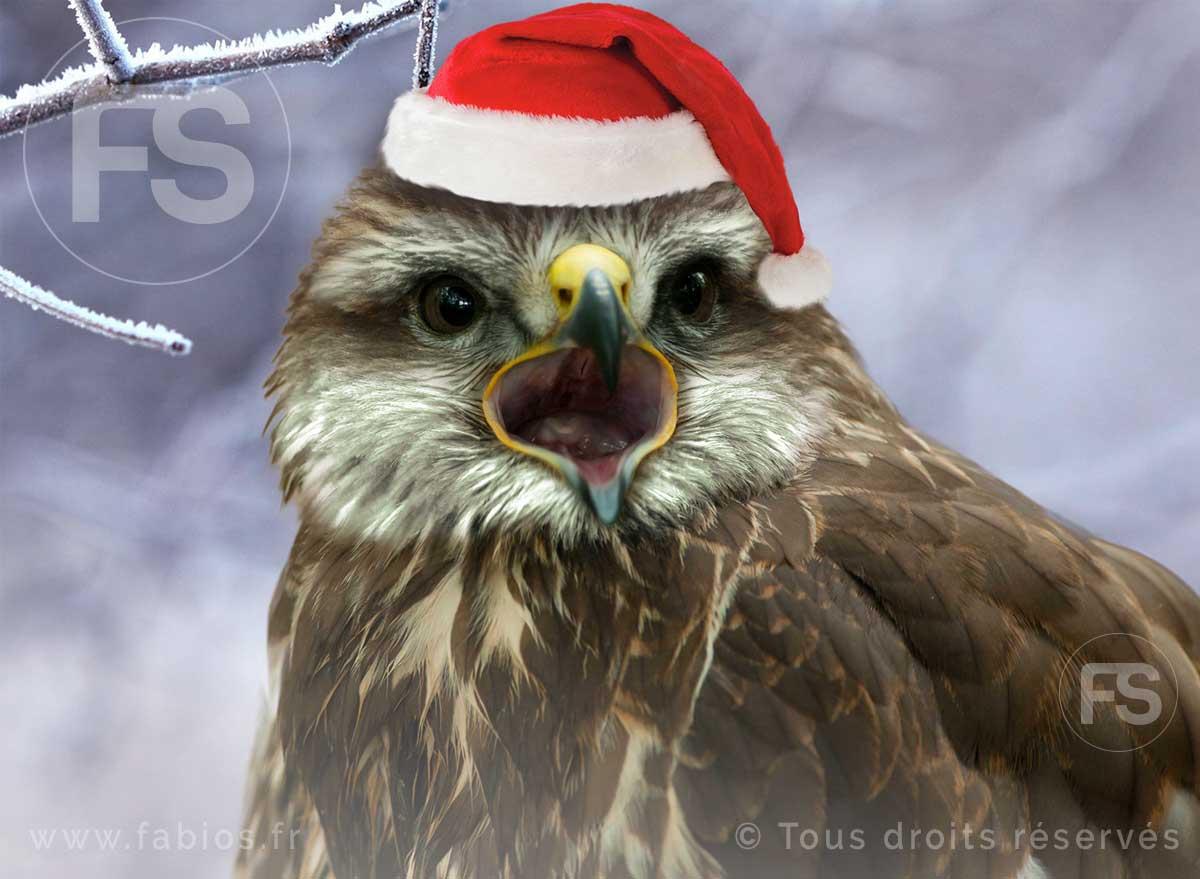 La «Buse de Noël»
